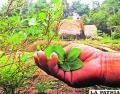 Liga de Defensa del Medio Ambiente (Lidema) en Sucre califica de positiva la gestión