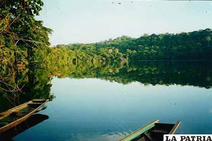 El parque nacional Madidi ha sido creado en el año 1995