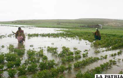 Lluvias afectan a varios municipios de Bolivia