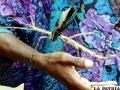 Los insectos más grandes de nuestro planeta