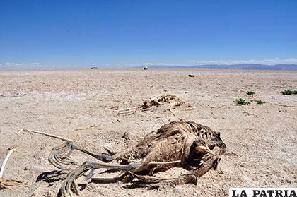 Cadáveres de animales hacen más dramático el panorama /REYNALDO BELLOTA-LA PATRIA