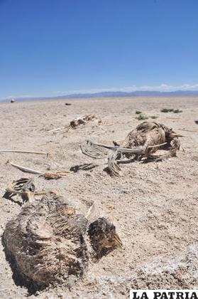 Cadáveres de aves que murieron en noviembre del pasado año