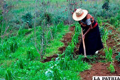 Los pueblos indígenas tienen un papel importante en la conservación de la biodiversidad