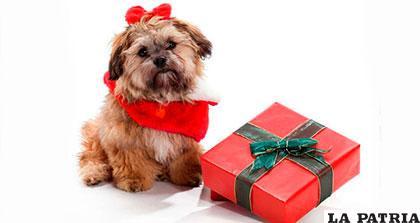 Son los regalones de la casa