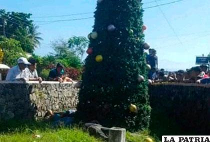 El árbol en el que trabajaban las víctimas fatales /Infobae