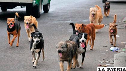 Jauría de perros en la calle /GOOGLE.COM