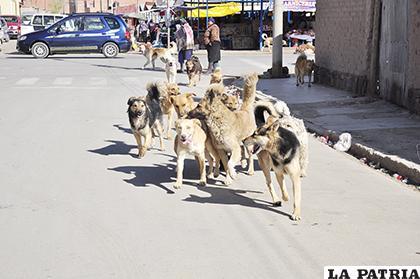 Continuará la captura de canes /LA PATRIA Archivo
